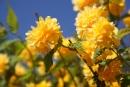 Kvetinky - pekné :)